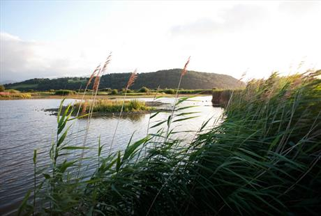 Conwy RSPB Nature Reserve, Llandudno